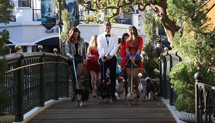 The Bachelor season 22 episode 3 recap dogs