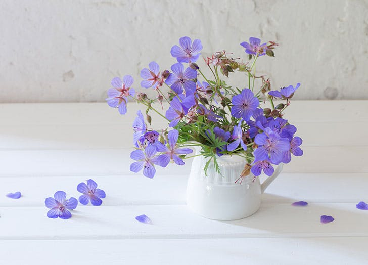 Vase full of violet flowers