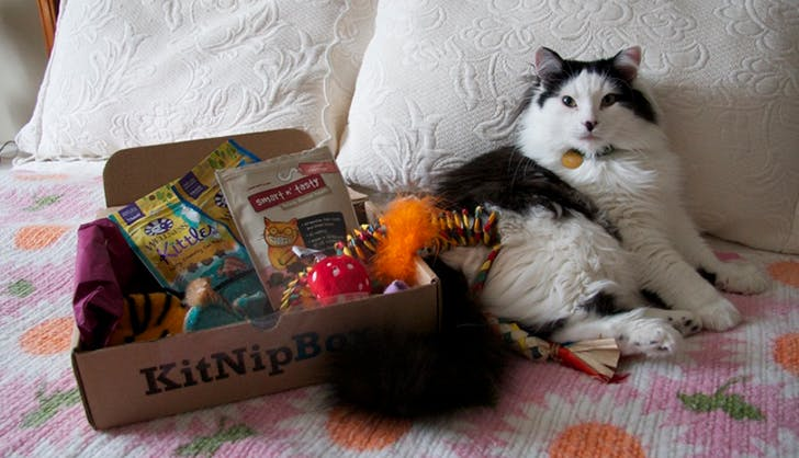 how to improve your cats health with kitnipbox