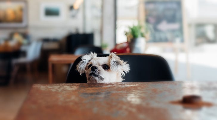 NYCs Much-Anticipated Doggie Cafe Is (Finally) Opening