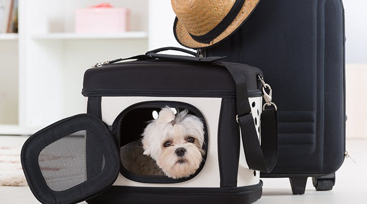 The Best Airlines for Flying with a Dog