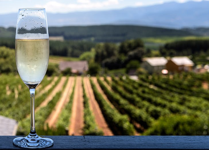 flute of cava with spanish vineyard in background