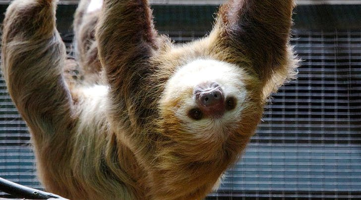 Meet Our New Favorite Celebrity Couple, the Beardsley Zoo Sloths