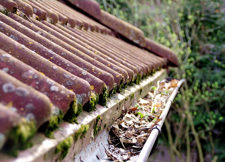 House gutters full of old leaves