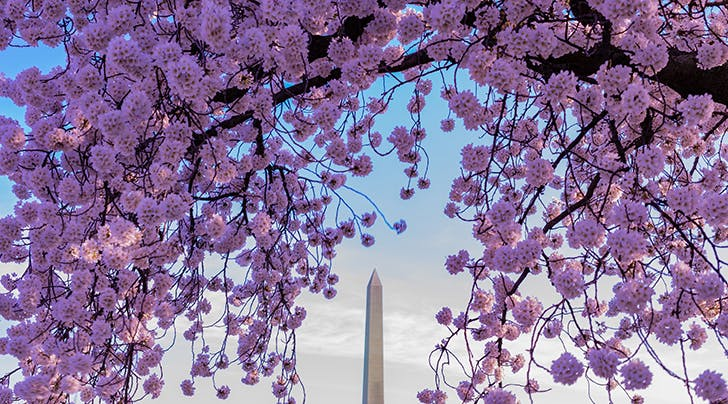 Heads Up: Washington, D.C.s Cherry Blossoms Are Blooming Early This Year
