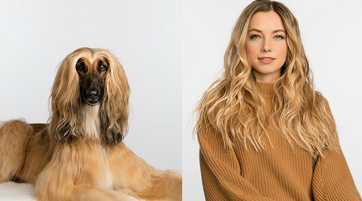 You and Your Dog Can Now Get Side-by-Side Blowouts (and Were Pretty Sure This Is a Joke)