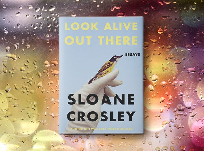 look alive out there sloane crosley