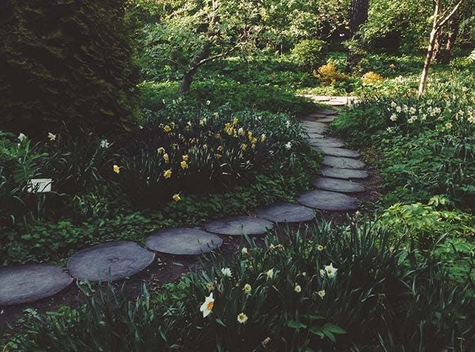 spring garden daffodils