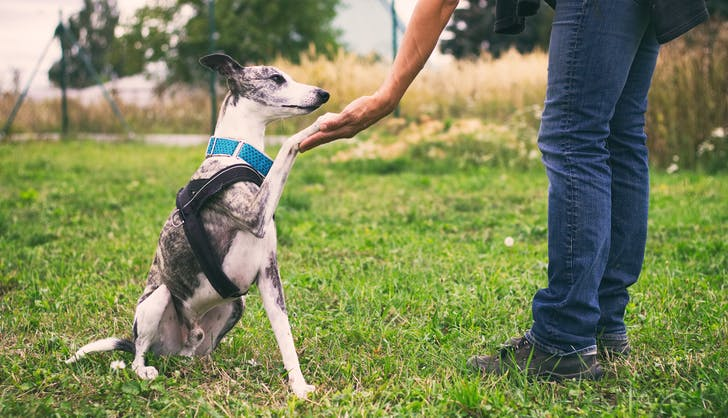 a greyhound pup and his owner