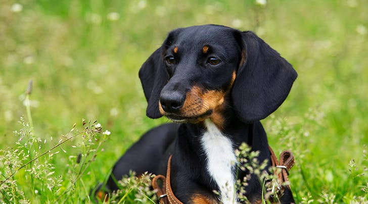 A Museum of Wiener Dogs Just Opened, and Its Honestly About Dang Time