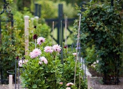 dahlia cutting garden janice parker 400
