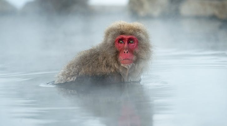 New Study Says Monkeys Need Frequent Spa Days to Feel Less Stressed (Um, Same...)