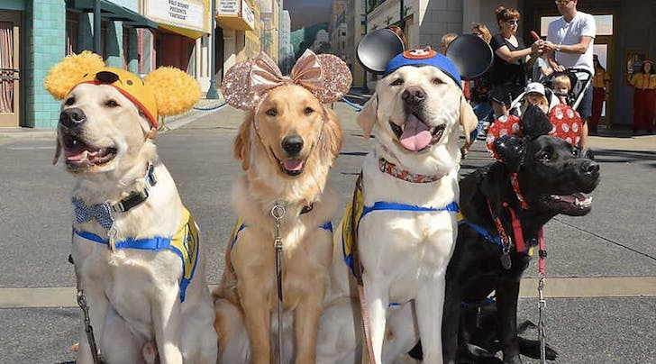 These Service Dogs Vacationing in Disneyland Will Make Your Week