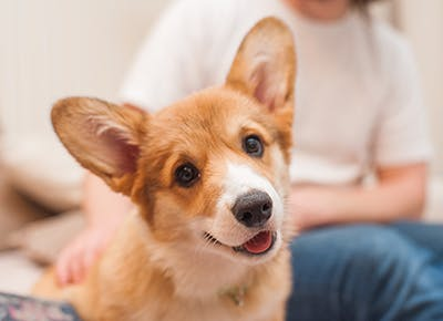 the best dog breeds for people with anxiety 400