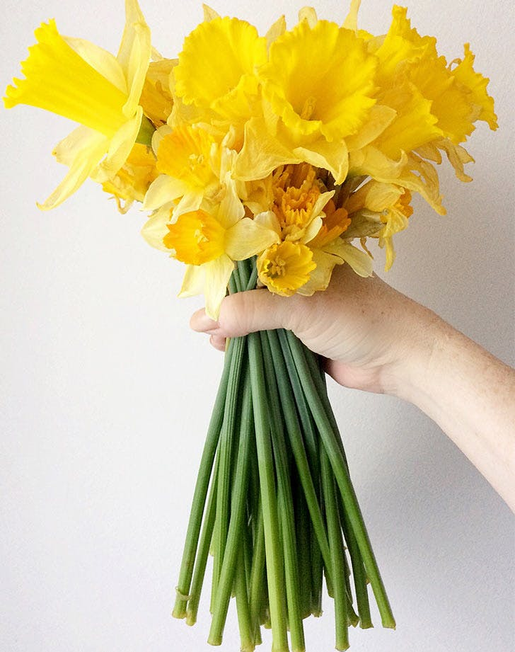 yellow flowers hand