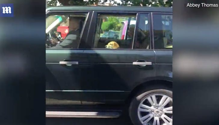 Queen Elizabeth and Meghan Markle s dog