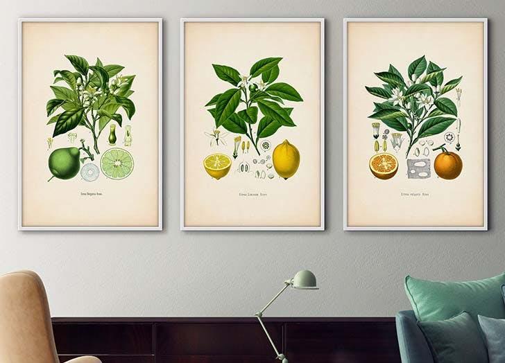 botanical prints trend citrus