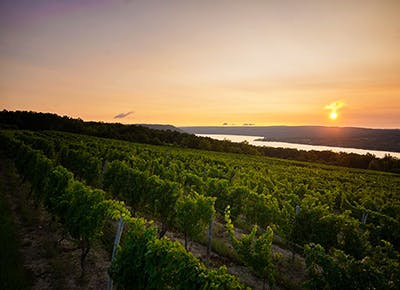 dr konstantin frank winery sunset 400