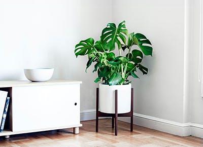 house plants 400