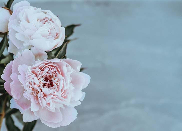 pink peonies grey