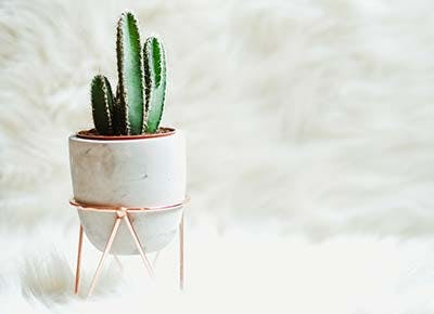 small cactus house plant 400