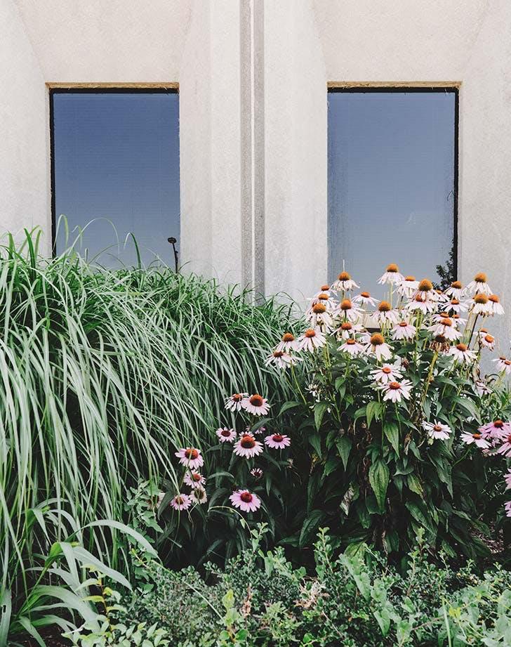 windbreak for Home garden
