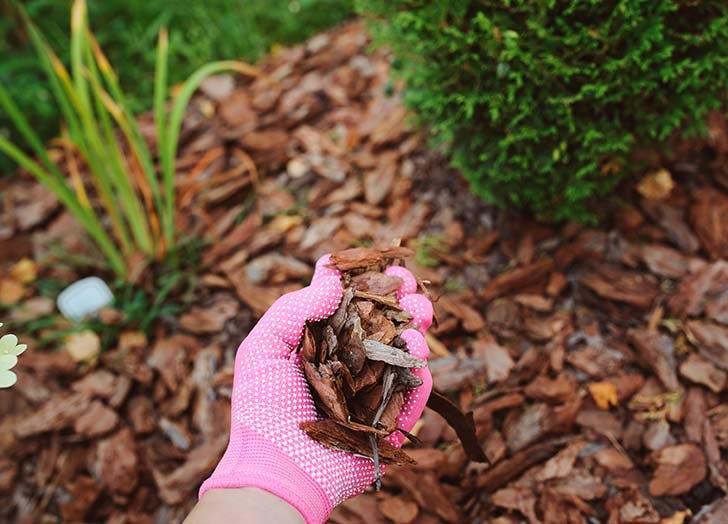 woman mulching garden