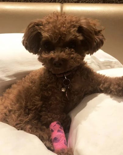 Katy Perrys Dog Nugget Brought Back To Life By Cpr Purewow