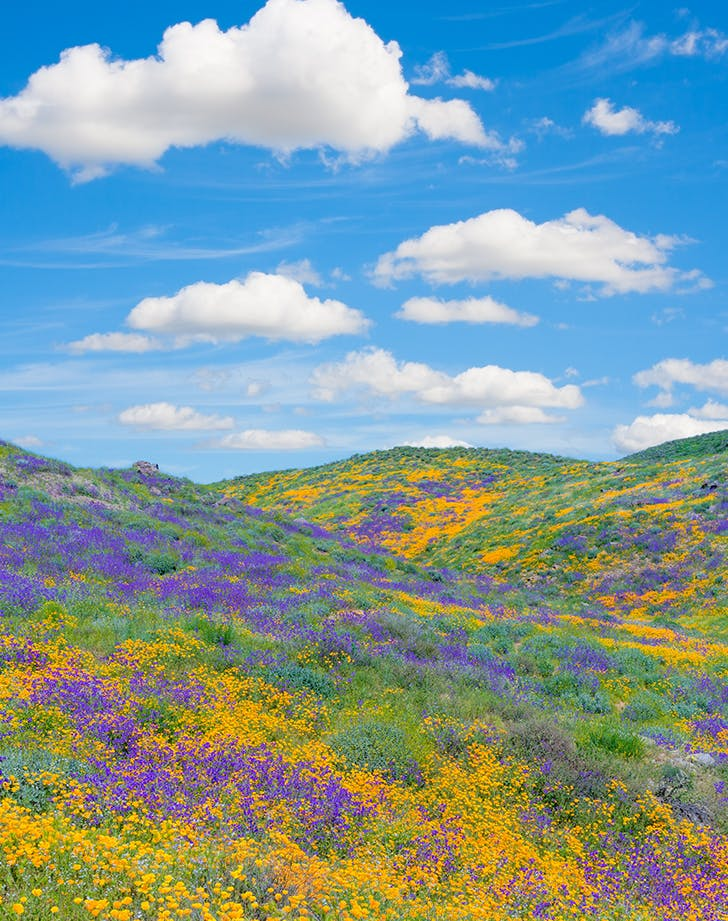 antelope valley in california