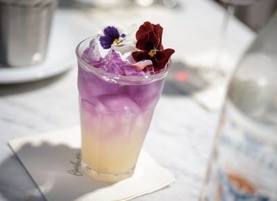 barbette purple yellow flower cocktail 400
