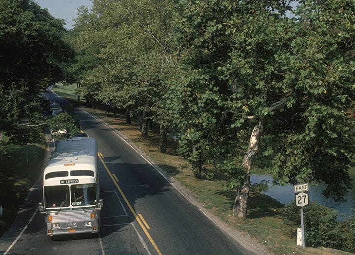 bus on road trees
