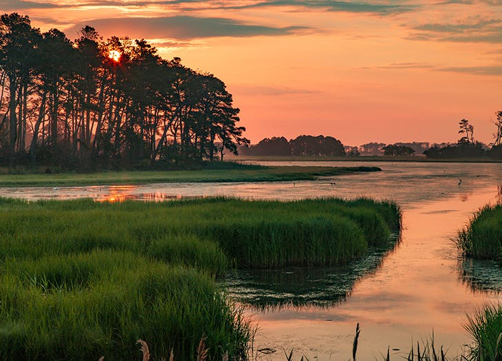 chincoteague marshes in virginia