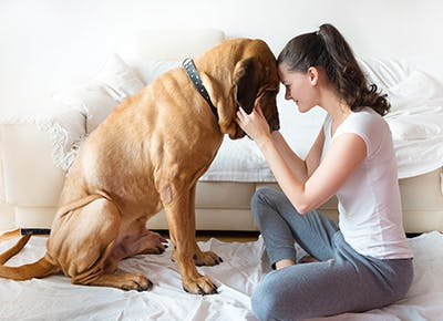 girl and dog in living room cat