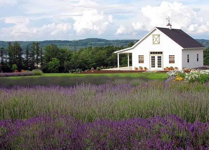 lockwood lavender farm in new york