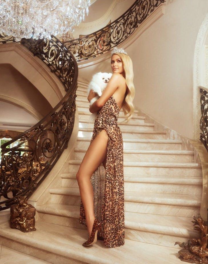 paris hilton leopard dress