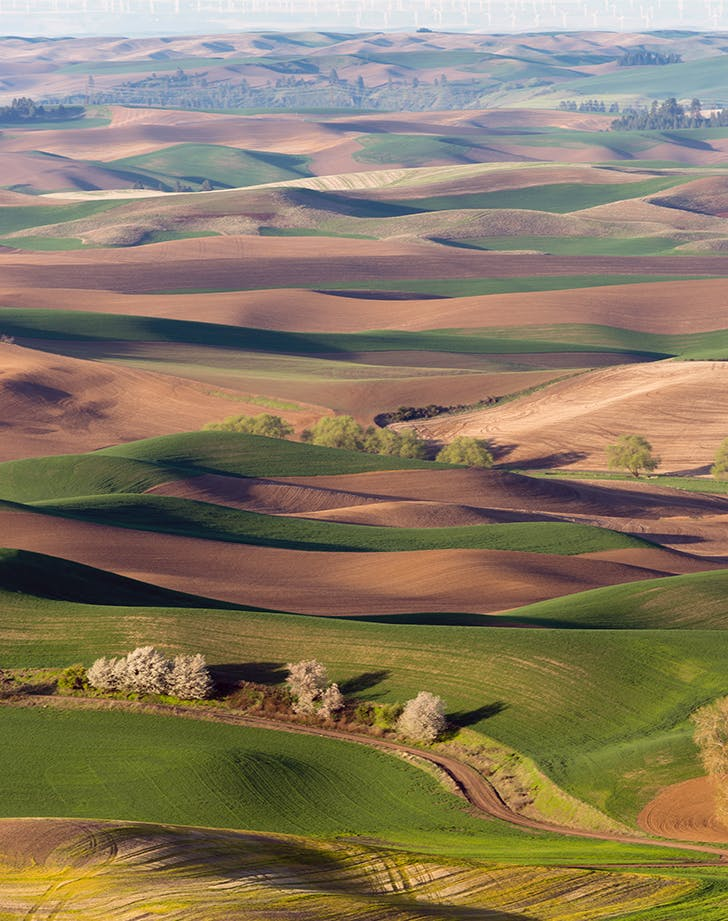 the rolling hills of palouse in idaho