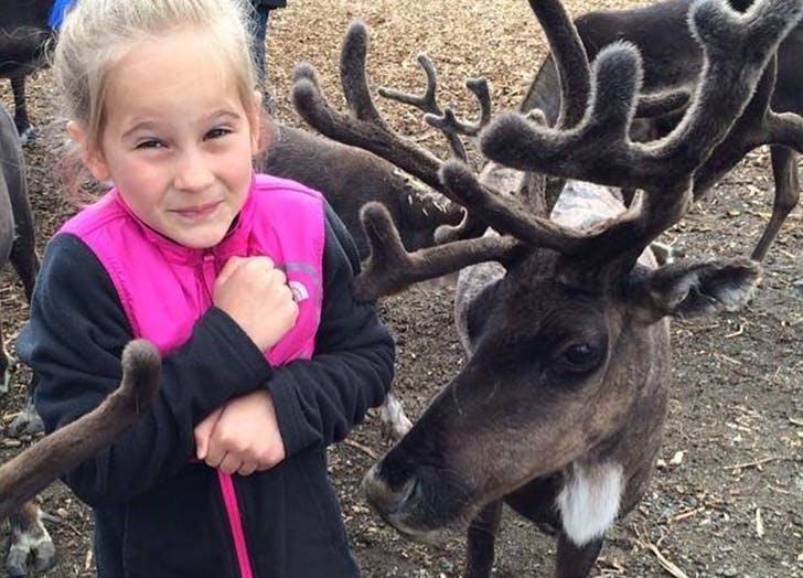 Alaska Reindeer Farm