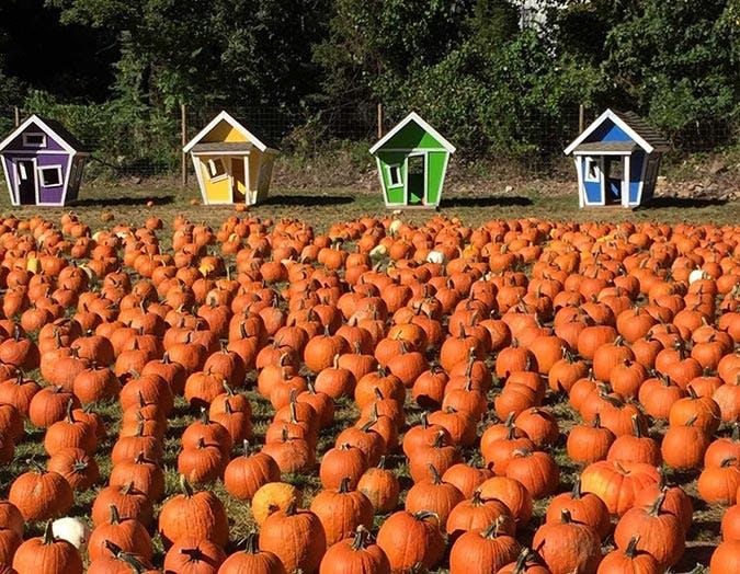 DEMAREST FARM pumpkins