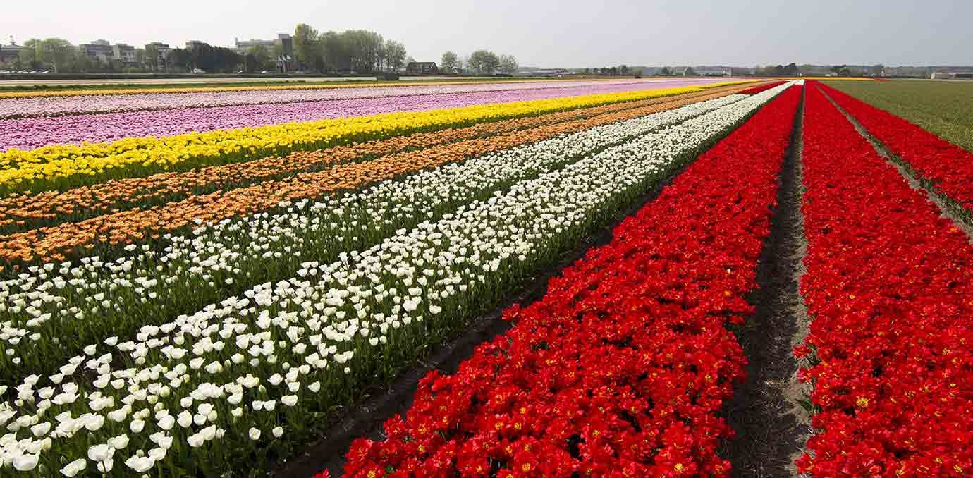 Keukenhof garden holland