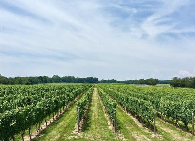hamptons wineries trees sky 400