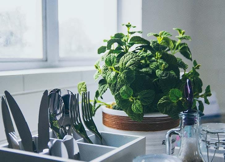 mint plant kitchen