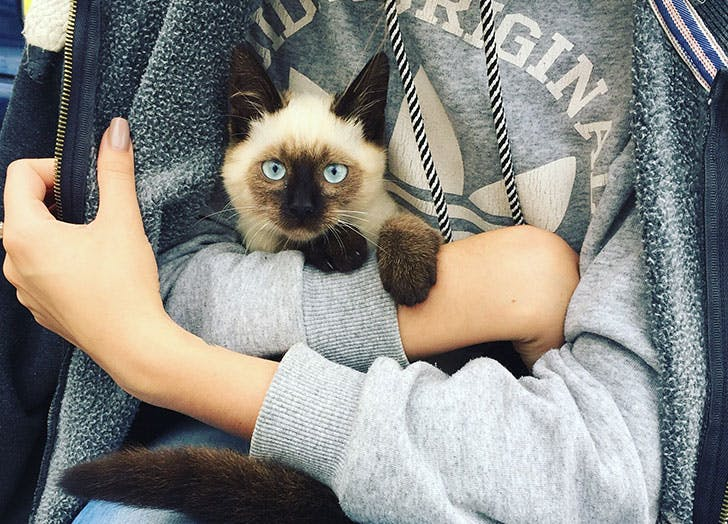 person holding a cat