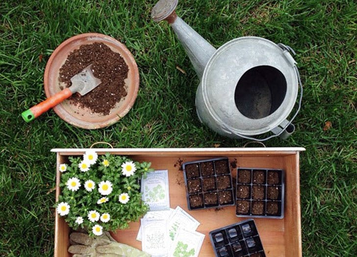 planting Seets watering can flowers