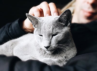 soft gray cat 400