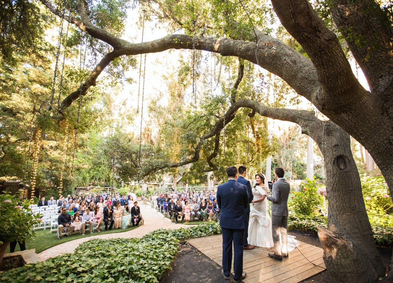 tree wedding hanging vibes