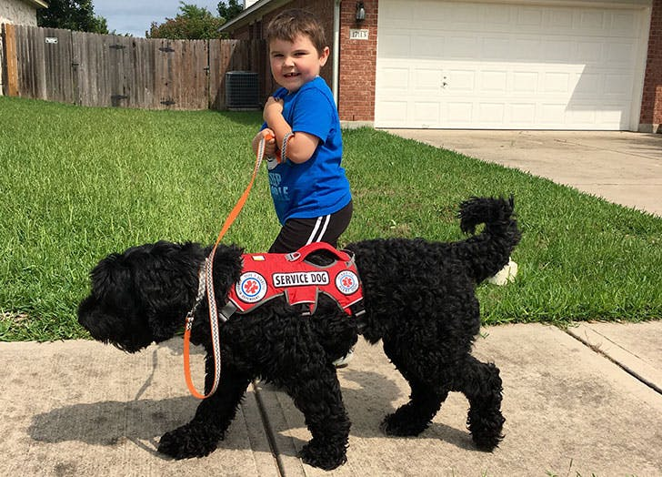 young boy with a service dog