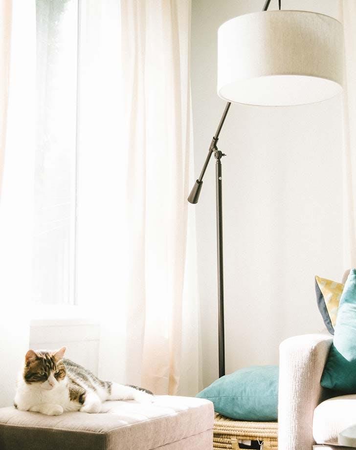 clean living room cat