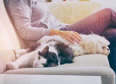 Purewow Pets Cute Videos Fun Ideas Advice From Veterinarians