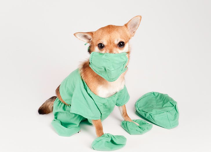 dog doctor costume
