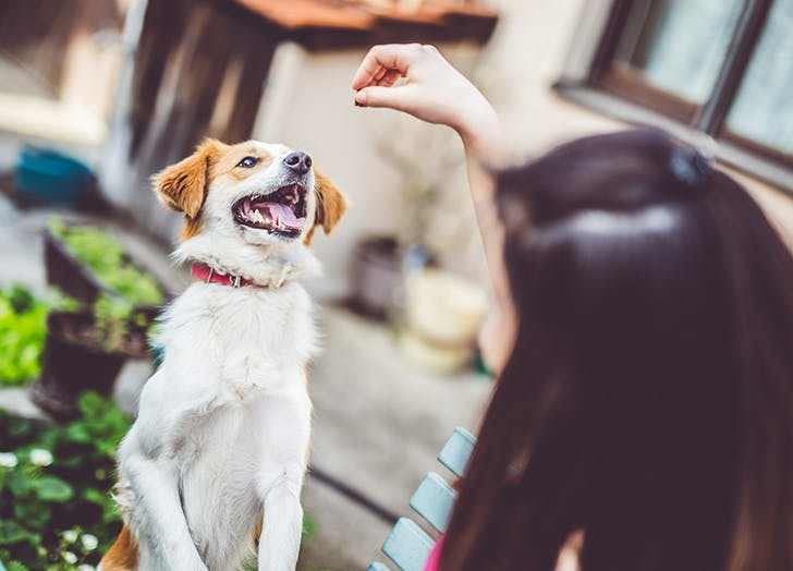 dog getting treat from human